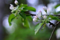 La foto simple de la aún-vida de la primavera florece en el árbol Foto de archivo libre de regalías