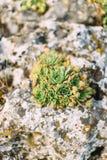 La foto vertical del crecimiento de flores verde en las montañas oscila Fotografía de archivo