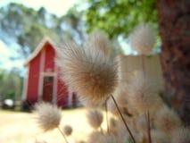 La fotografía macra del conejo ata el granero de la hierba Foto de archivo
