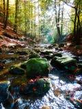 La fotografía otoñal hermosa de montañas fluye en bosque Imágenes de archivo libres de regalías
