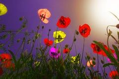 La fotosintesi è arte Fotografia Stock Libera da Diritti