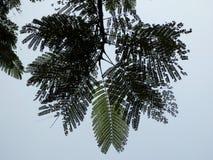 La fougère aiment l'arbre tropical au Vietnam Photos libres de droits