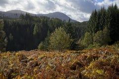 La fougère d'automne colore les montagnes écossaises photos libres de droits