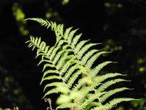 La fougère de jeune arbre Photo libre de droits
