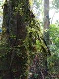 La fougère est dans la forêt images libres de droits