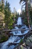 La fougère tombe en montagnes rocheuses Image stock