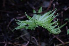 La fougère verte se développe sur le plancher humide photo libre de droits