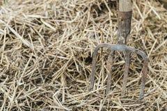 La fourche du vieil agriculteur Image libre de droits