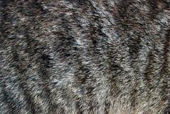 La fourrure Image libre de droits