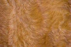 La fourrure rectifiée. Images libres de droits