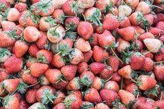 La fragola inoltre sembra portare una serie di indennità-malattia , fragola fresca al mercato , concetto della frutta , concetto  Immagine Stock Libera da Diritti