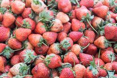 La fragola inoltre sembra portare una serie di indennità-malattia , fragola fresca al mercato , concetto della frutta , concetto  Fotografie Stock Libere da Diritti