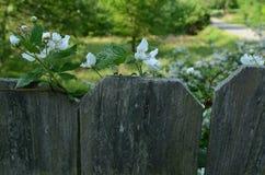 La framboise fleurit au sommet de la route de campagne de barrière dans la distance Photo libre de droits