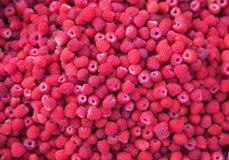 La framboise rouge fraîche porte des fruits fond Vue supérieure Photos stock