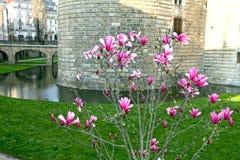 La Francia, la Loira Atlantique, Nantes, castello Fotografia Stock Libera da Diritti