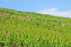La Francia, villaggio pittoresco di Riquewihr nell'Alsazia Immagini Stock Libere da Diritti