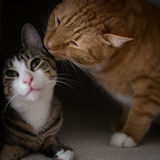 La fraternité de deux chats Image stock