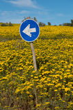 La freccia della direzione firma dentro un prato dei fiori sulla costa ovest di sud Immagini Stock