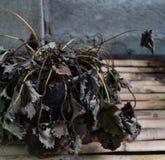 La fresa murió Imagen de archivo