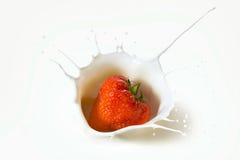 La fresa roja da fruto cayendo en la leche imagen de archivo libre de regalías