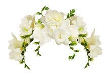 La fresia blanca florece en un arrangment hermoso del arco imagen de archivo libre de regalías