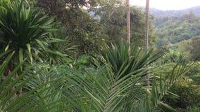 La fronda de las palmas reales sale del movimiento del viento suave de la naturaleza Hojas verdes tropicales en la montaña metrajes