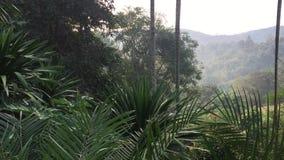 La fronda de las palmas reales sale del movimiento del viento suave de la naturaleza Hojas verdes tropicales en la monta?a metrajes