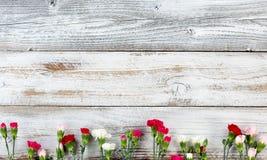 La frontera colorida de la parte inferior de la flor del clavel en blanco resistió al woode Fotografía de archivo libre de regalías