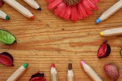 La frontera de lápices de madera, los pétalos secos y el crisantemo florecen en fondo de madera marrón Visión superior Imágenes de archivo libres de regalías