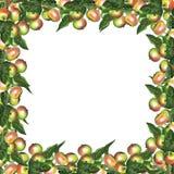 La frontera de una rama 3 de la manzana fotos de archivo
