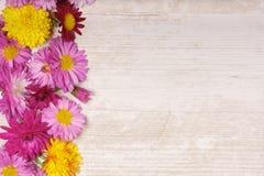 La frontera izquierda del marco del crisantemo florece en backg de madera ligero Fotografía de archivo