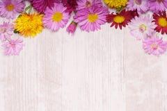 La frontera redondeada superior del crisantemo florece en la parte posterior de madera ligera Imagen de archivo