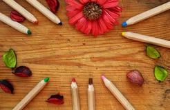 La frontière des crayons en bois, les pétales secs et le chrysanthème fleurissent sur le fond en bois brun Vue supérieure Photographie stock