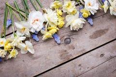 La frontière du narcisse coloré de ressort, muscaries fleurit sur Rus Photos libres de droits