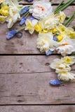 La frontière du narcisse coloré de ressort, muscaries fleurit sur Rus Images stock