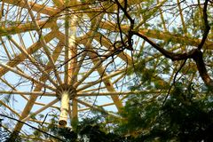 La frontiera di grande albero Immagini Stock Libere da Diritti