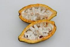 La fruta abierta del grano de cacao fotografía de archivo libre de regalías