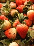 La fruta de la fresa Imagen de archivo libre de regalías