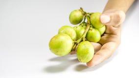 La fruta de Longkong, de Langsat o de Lanzones es endémica al guda de Asia sudoriental/de Gadu, imágenes de archivo libres de regalías