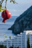 La fruta de una granada en la ciudad de playa imágenes de archivo libres de regalías