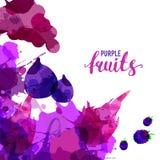 La fruta fij? las manchas blancas /negras y las manchas exhaustas con una zarzamora del espray, uvas, higo, fruta de la acuarela  fotografía de archivo libre de regalías
