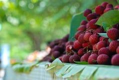 La fruta roja Imagen de archivo libre de regalías