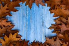 La frutta d'annata di autunno della composizione ha sistemato il backgrou di legno del cerchio Immagini Stock
