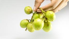 La frutta di Longkong, di Langsat o di lanzones è endemica al guda Gadu/di Sud-est asiatico, immagine stock