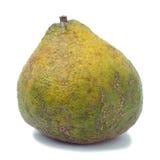 La frutta di Ugli egualmente ha chiamato la frutta di Uniq fotografia stock libera da diritti