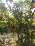 La frutta e le verdure mangiano soltanto l'alimento biologico Fotografia Stock
