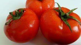 la fucilazione lenta di versamento della vitamina dell'acqua luminosa liquida sana matura dei pomodori, ha bagnato la caduta stock footage