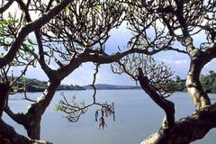 La fuente de Nile River blanca en Uganda Imágenes de archivo libres de regalías