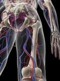 La fuente de sangre de la pierna Imagen de archivo