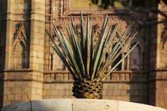 La Fuente Del Maguey Lizenzfreies Stockfoto